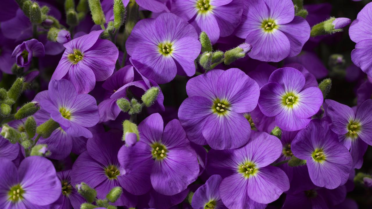 Florgrow producten Aubrita