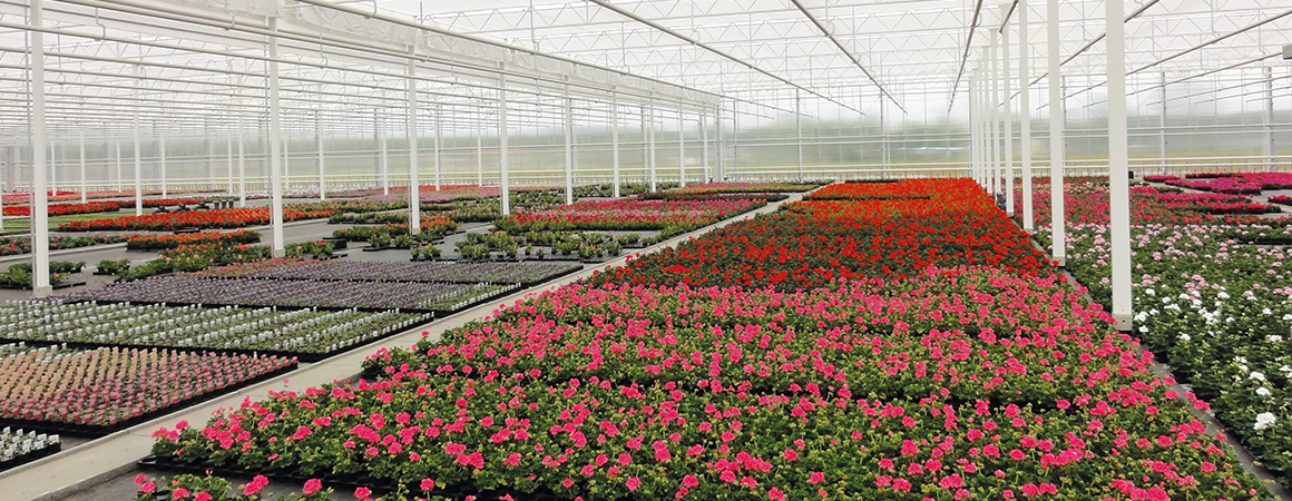 Florigrow over ons bloemen